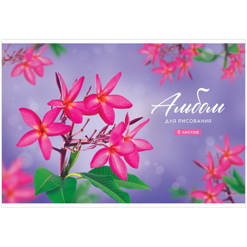"""Альбом для рисования 08л., А4, на скрепке ArtSpace """"Цветы. Plumeria"""", обложка-офсет"""