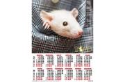 2020 Календарь А2 Крыса в кармашке №15
