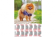 2020 Календарь А2 Собаки. Шпиц № 17