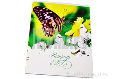 Тетрадь А5 48л. ПИФАГОР клетка, офсет №2, обложка картон, БАБОЧКИ, 403013