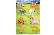 "Плакат ""Дикие животные"" А2"